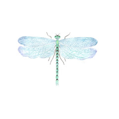 Watercolor dragonfly illustration.