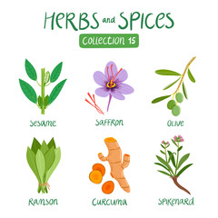 Herbs and spices collection 15