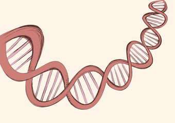 Freehand vector sketch of DNA
