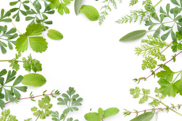 frame of green herbs in white background