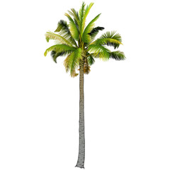 One palm tree.