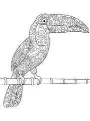 Toucan Coloring book vector for adults