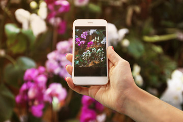 Female hand taking photo of beautiful flowers with smart phone at floral shop