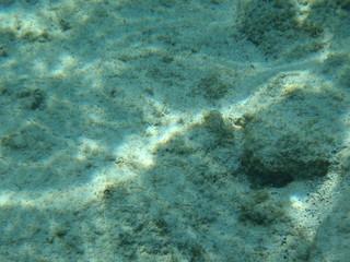 ハワイの水中