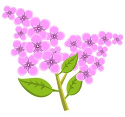Branch of lilac flowers. Vector illustration.