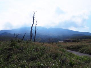 三宅島 サタドー岬の枯れ木