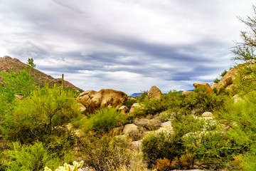 Cacti, Shrubs and large Rocks and Boulders in the desert near Carefree Arizona, USA
