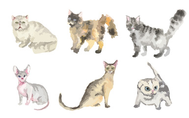 Watercolor cats set on white background. Beautiful and cute domestic animals.