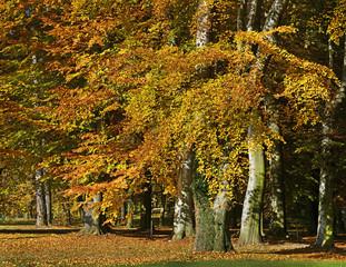 Autumn in the park, Silherovice near Ostrava, Czech Republic