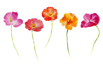 Watercolor flower set for your design.