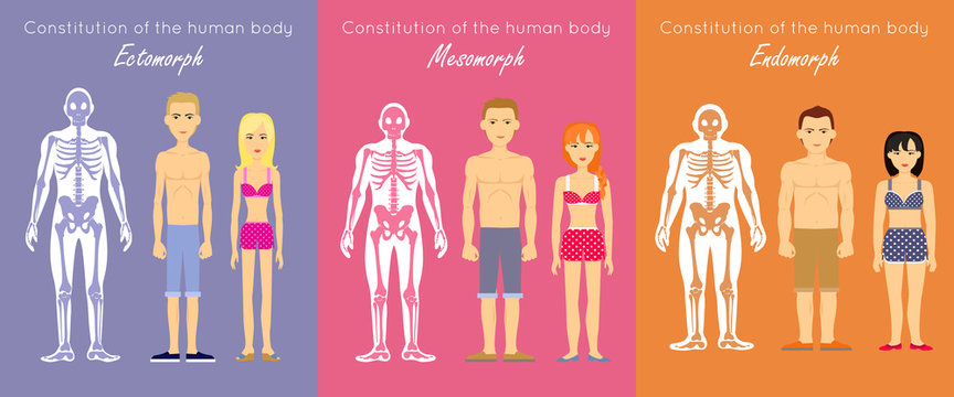 Human Body Constitution Flat Design Vector Concept