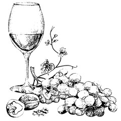 Wine and grapes sketch