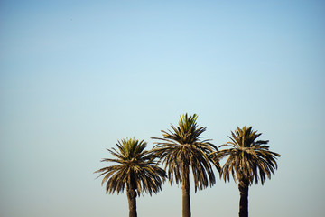 tree palm trees
