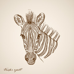 Engraving vintage hand drawn vector zebra doodle collage