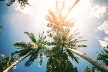 Palm Trees Against Blue Sky Toned Effect Nature Landscape Tropical Background Holiday Travel Design View Up