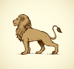 Lion. Vector drawing