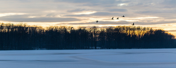 ducks flying over frozen lake and forest at sunset