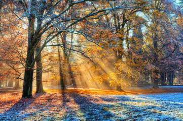 Morning sunrays in winter forest