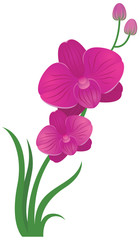 Flower orchid pink and purple color Stock vector illustration
