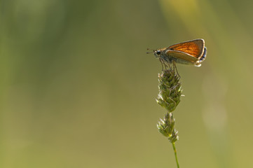 orange butterfly resting in a plant