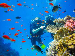 Дайвинг у коралловых рифов в Египте