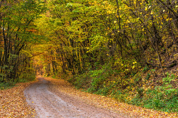 road throug autumn forest
