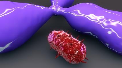 Antigene & Bacteria