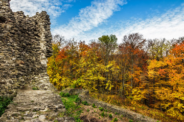 ruins of an old castle in the forest