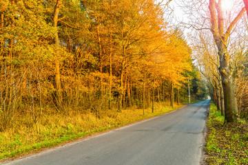 Asphalt road in golden autumn forest.