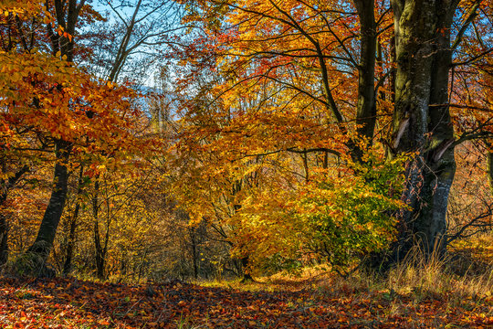 forest in red foliage on sunny autumn day