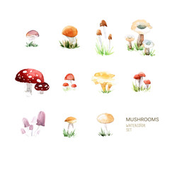 Vector set of watercolor mushroom elements on white background.
