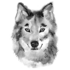 Wolf hand painted watercolor illustration isolated on white background