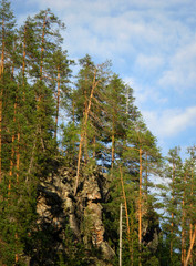 Forest on rocky slope at sunny summer day
