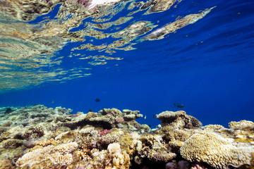 edge of the reef reflex