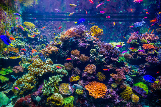 A variety of bright fish move against the backdrop of coral polyps and in the underwater world of a large aquarium (Singapore)