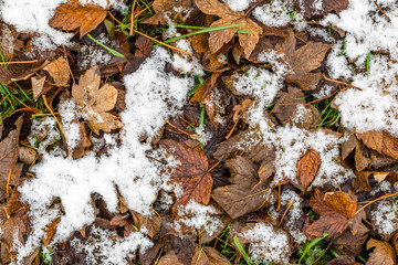 First snow on dead leaves, early winter or thaws in spring