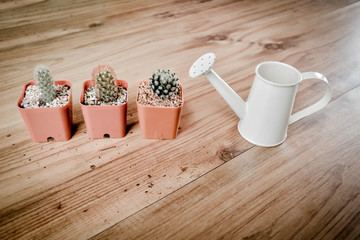 Little beautiful cactus with watering on wood background , hipster tone