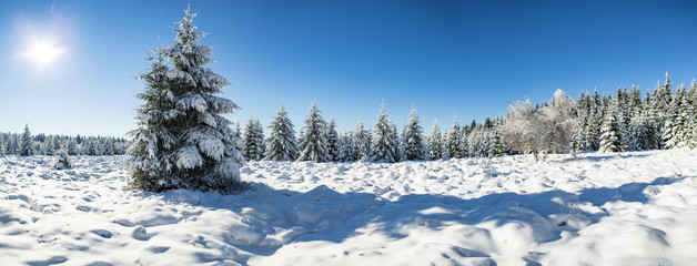the wintry forest