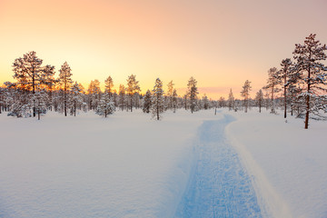 Sundown in winter snowy forest, beautiful landscape
