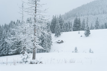 Fototapete - Snowy winter in a mountain forest