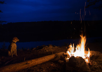 dog sitting by the fire. flames in the dark. majestic fire with sparks at night. A special place on the stones. concept of ecology and use of fire outdoors in travel. used as background