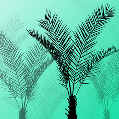 Palm trees detailed graphic silhouettes abstract nature backgrou