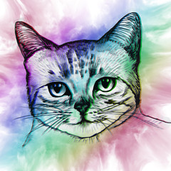 Colorful cat in abstract ornate. Illustration can be used in pos