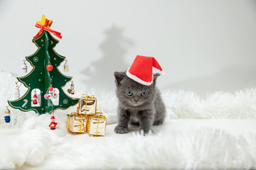Kittens with Christmas New Year decoration