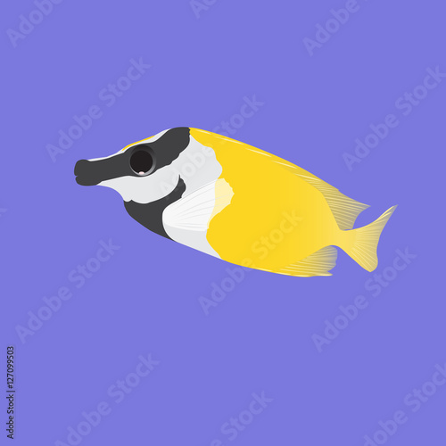 Fish fox (vulpinus, siganus)