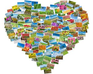Various nature photos arranged in heart frame