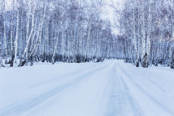 Road to winter birch forest
