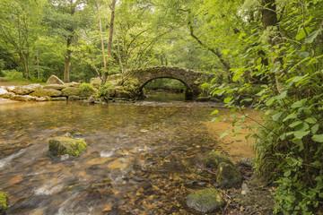 Packhorse Bridge In Woodland