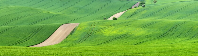 lines of green fields in Czech republic