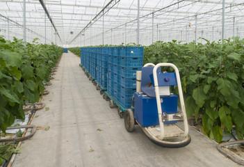 internal transportation in a greenhouse